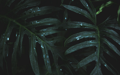 dark green palm leaves on a black background