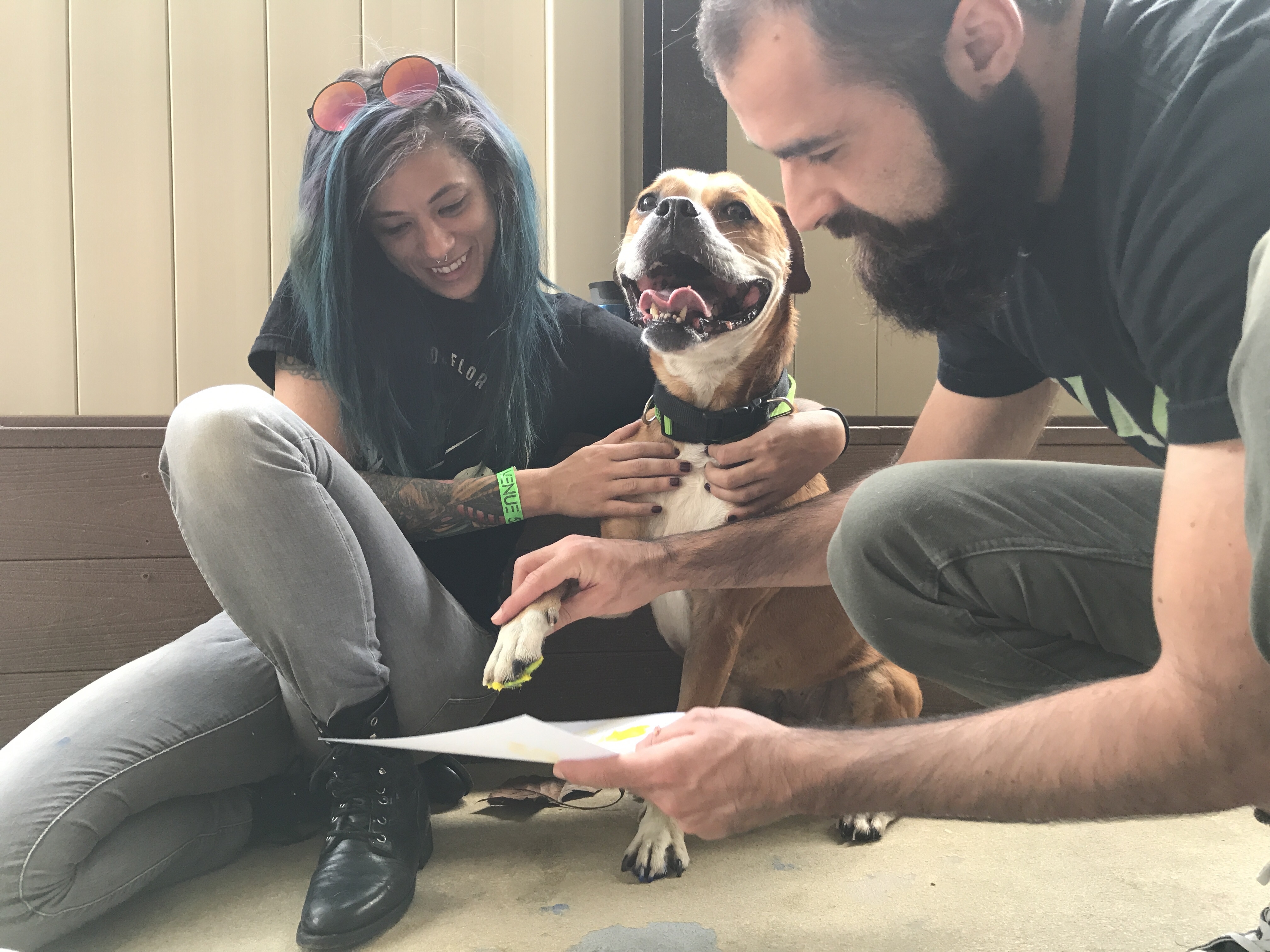 Designzillas Volunteering at Pet Alliance of Greater Orlando – Gina and Tim Painting with Buddy